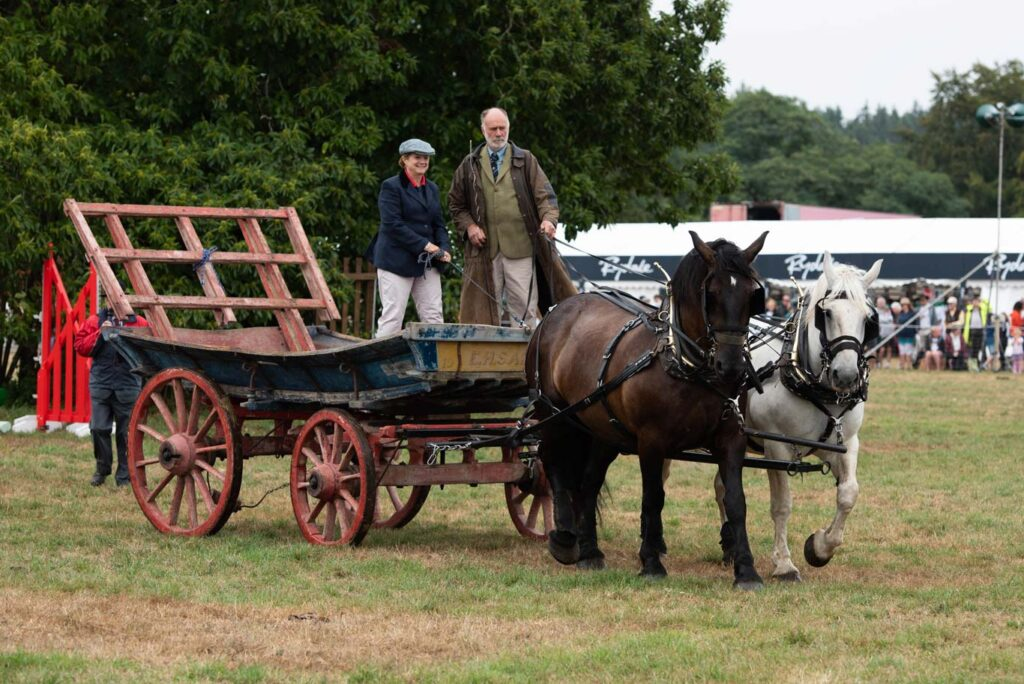 Heavy Horses at Ellingham Show