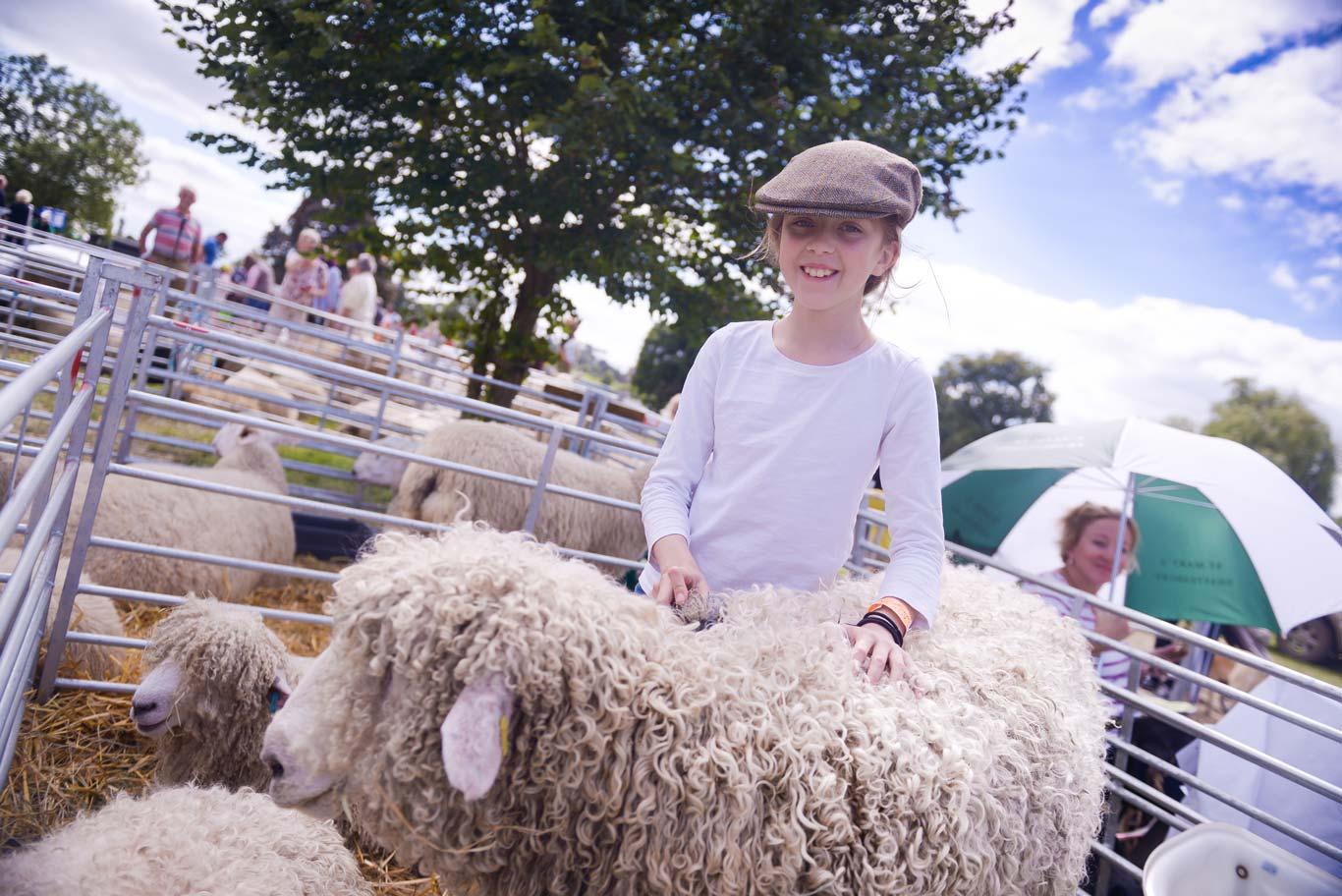 Sheep Classes